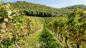 Winnica w Francja (2) fotografia royalty free