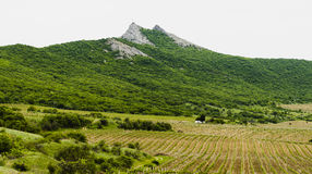 Winnica w górach z domem Fotografia Royalty Free