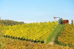 Winnica w jesieni Obraz Stock