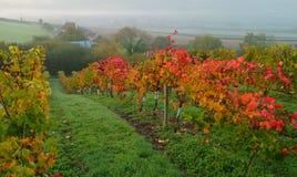 Winnica w jesieni fotografia stock