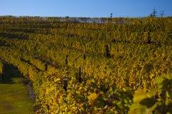 Winnica w jesieni Zdjęcie Stock