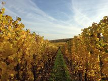 Winnica w jesieni Obrazy Royalty Free