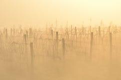 Winnica w jesieni Zdjęcie Royalty Free