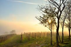 Winnica w jesieni Zdjęcia Stock