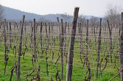 Winnica w Kakheti wina regionie, Gruzja, Alazani dolina Obraz Stock
