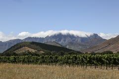 Winnica w Kapsztad Zdjęcia Royalty Free