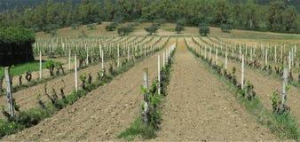 Winnica w Kwietniu Obraz Royalty Free