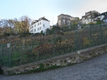 Winnica w Montmartre Zdjęcie Royalty Free