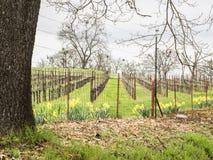 Winnica w obszarze wiejskim w wczesnej wiośnie fotografia royalty free