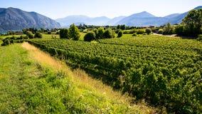 winnica włoski Zdjęcie Royalty Free
