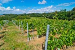 Winnica w półkolu przygotowywał robić winu Obrazy Stock