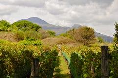 Winnica w Scavi di Pompeii, Włochy Fotografia Stock