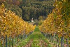 Winnica w spadku zdjęcie royalty free