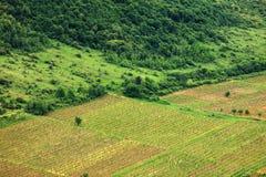 Winnica w Subcarpathians Zdjęcie Royalty Free