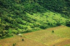 Winnica w Subcarpathians Zdjęcie Stock