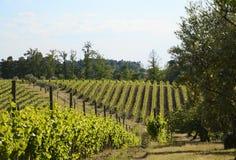 Winnica w wiośnie w Portugalia Obrazy Royalty Free
