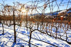 Winnica w zimie Zdjęcie Stock
