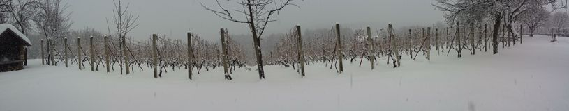 Winnica w zimie Fotografia Stock