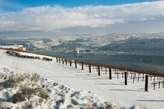 Winnica w zimie Kolumbia rzeczny wąwóz, Waszyngton fotografia royalty free
