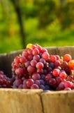 winnica winogron Zdjęcia Stock