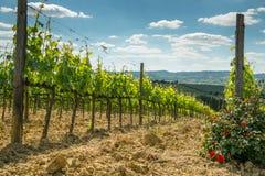 winnica z różami Zdjęcia Stock