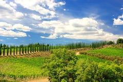 Winnica z rzędem cyprysowi drzewa w Val d ` Orcia, Tuscany, Ital obraz royalty free