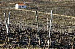 winnica zimy. zdjęcie stock