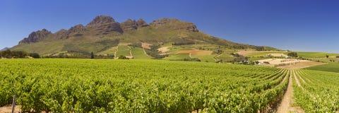 Winnicy blisko Stellenbosch w Południowa Afryka obrazy royalty free