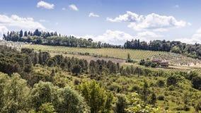 Winnicy Chianti w Tuscany Obrazy Stock