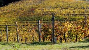 Winnicy deseniują w jesieni Fotografia Royalty Free