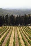 Winnicy i cyprys Fotografia Stock