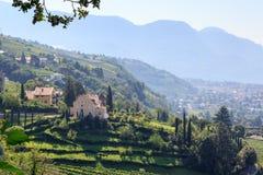 Winnicy i góry panorama w Merano, Południowy Tyrol Obrazy Royalty Free