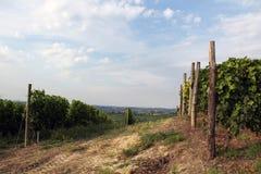 Winnicy krajobraz Fotografia Stock