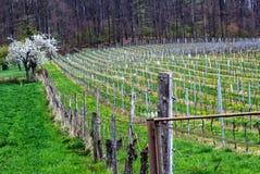 Winnicy krajobraz w Spessart górach, Niemcy Zdjęcia Stock