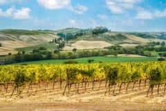 Winnicy krajobraz w Tuscany, W?ochy zdjęcia stock