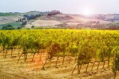 Winnicy krajobraz w Tuscany, W?ochy zdjęcia royalty free