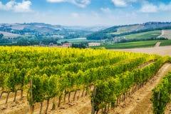 Winnicy krajobraz w Tuscany, W?ochy obrazy royalty free