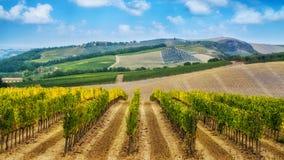 Winnicy krajobraz w Tuscany, W?ochy zdjęcie royalty free