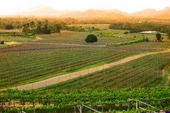 Winnicy krajobraz z widokiem górskim Zdjęcia Stock