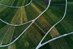 Winnicy kształtują teren na wzgórzu od wierzchołka z trutniem Zdjęcie Stock