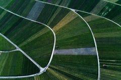 Winnicy kształtują teren na wzgórzu od wierzchołka z trutniem Zdjęcia Royalty Free
