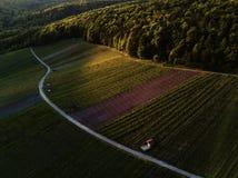 Winnicy kształtują teren na wzgórzu od wierzchołka z trutniem Zdjęcie Royalty Free