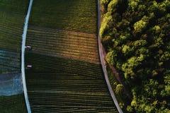 Winnicy kształtują teren na wzgórzu od wierzchołka z trutniem Fotografia Royalty Free