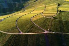 Winnicy kształtują teren na wzgórzu od wierzchołka z trutniem, dji Obrazy Royalty Free