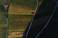Winnicy kształtują teren na wzgórzu od wierzchołka z trutniem, dji Zdjęcie Royalty Free
