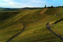 Winnicy kształtują teren na wzgórzu od wierzchołka z trutniem, dji Zdjęcia Royalty Free