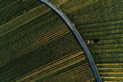 Winnicy kształtują teren na wzgórzu od wierzchołka z trutniem, dji Obraz Stock