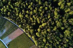 Winnicy kształtują teren na wzgórzu od wierzchołka z trutniem, dji Obraz Royalty Free