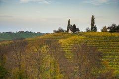 Winnicy landcape Zdjęcie Stock