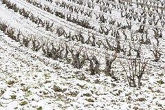 Winnicy opad śniegu w wiosce Fotografia Stock